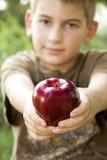 Barnet som fördjupa en RÖDA Apple - fokusera på äpplet Royaltyfri Bild