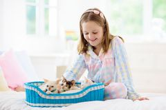 Barnet som spelar med, behandla som ett barn katten Unge och kattunge arkivfoto