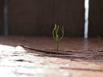 Barnet spirar göra dess väg till och med ett träbräde Arkivfoto