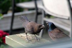 Barnet svärtar fågeln royaltyfria bilder