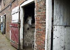 Barney. A friends horse, stabled for the night Stock Photo