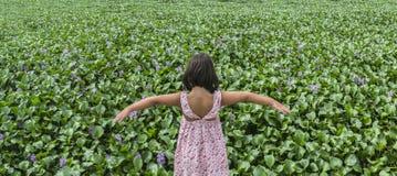 Barnflicka över banken för vattenhyacint Invasive växter på floder c Royaltyfri Bild