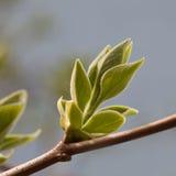 Barngräsplan lämnar trädfilialen Arkivbild