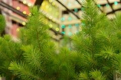 Barngräsplan sörjer gran-träd närbild Arkivbilder
