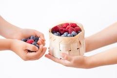 Barnhänder, hållande hallon och blåbär, korg med arkivfoto