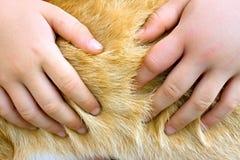 Barnhänder i den djura pälsen Arkivfoto