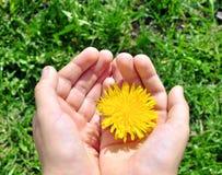 Barnhänder med en blomma Arkivfoton