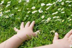 Barnhänder som plaing med den vita tusenskönan, blommar på ett växt av släktet Trifoliumfält C royaltyfria bilder
