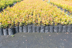 barnkammare oregon planterar plantan Arkivfoton