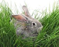 Barnkanin och grönt gräs Royaltyfri Fotografi