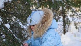 Barnkast av snö från trädfilialer i en solig dag arkivfilmer