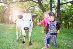 Barnlek med en tjur i skognötkreaturet Arkivbild