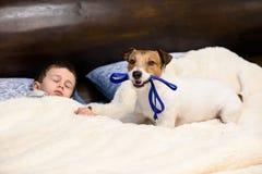 Barnpojken som sover i säng, och hans hund som önskar att gå för, går royaltyfri bild