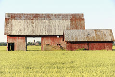 Barns 3. Isolated barns in rural setting showing structure and color in early morning light Stock Photo
