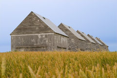 Barns in crop field. Agriculture barns in  field of wheat Stock Photo