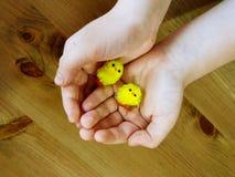 Barns händer rymmer två lilla leksakhönor royaltyfria foton