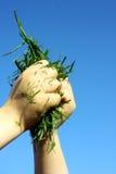 Barns händer som rymmer gräsurklipp Royaltyfri Bild