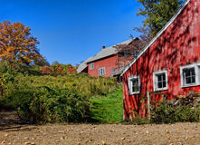 barns red arkivfoton