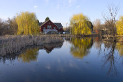 Barns Reeds and Willows on Pond. Barn buildings on Farm bordering pond reeds and willow trees at Dodge Nature Center in West Saint Paul Minnesota Royalty Free Stock Photo