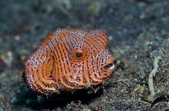 barnslig översiktspuffer för fisk Arkivbilder
