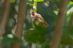 Barnslig gullig fågel som brett kallar den öppna räkningen royaltyfria bilder