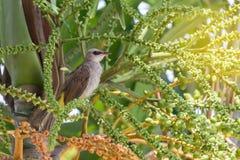 Barnslig gullig fågel som sätta sig på palmträdet fotografering för bildbyråer