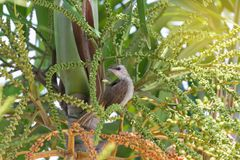 Barnslig gullig fågel som sätta sig på palmträdet royaltyfri fotografi