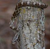 Barnsligt svart tjaller ormen i träd Royaltyfria Bilder