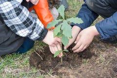 Barnväxtträd Barn planterade ekar landskap Att att plantera ett träd royaltyfri foto