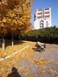 Barnvagn i höst parkerar Royaltyfri Foto