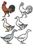 Barnyard πτηνά απεικόνιση αποθεμάτων