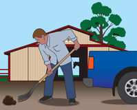Barnyard Cleanup. Rancher cleaning up after his horse with a pitchfork Royalty Free Stock Photos