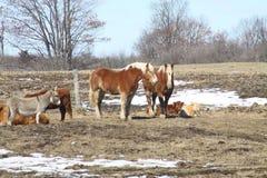 Barnyard przyjaciele Fotografia Royalty Free
