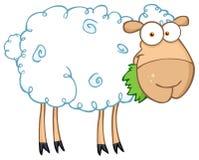 Barnyard sheep eating grass Royalty Free Stock Image