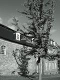 barock ginkgo Royaltyfri Fotografi