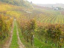 Barolo的山麓意大利生长葡萄 免版税库存照片