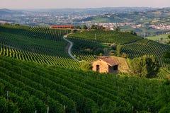 Barolo,意大利绿色葡萄园  免版税库存照片