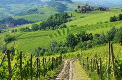 Free Barolo Castello Di La Volta Royalty Free Stock Images - 42463879