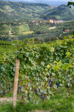 Barolo - Italy 2 Stock Photography