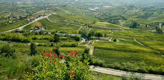 Barolo vineyards Royalty Free Stock Photo