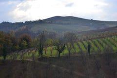 Barolo vingård, Italien royaltyfria bilder