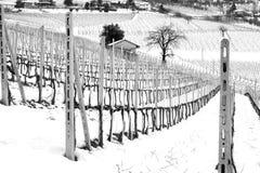 Barolowijngaarden, de winter sneeuwmening De Zwart-witte foto van Peking, China Stock Fotografie