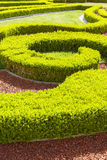 Baroque boxwood hedges against trickling brick gravel paths. Stock Photos