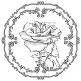 Baroque frame flower Royalty Free Stock Images