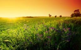 Barossa Field. Spring Sunset in the Barossa Stock Photos