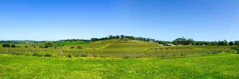 Barossa panoramique Photographie stock libre de droits
