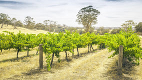 Barossa Valley Stockbilder