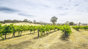 Barossa Valley. An image of the Barossa Valley landscape in Australia Stock Images