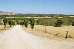 Barossa Valley, Australia. Landscape of Barossa Valley, Australia Stock Photos