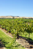 Barossa Valley, Australia Royalty Free Stock Photo